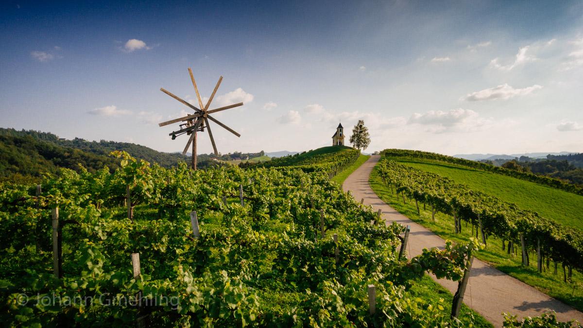 Weingarten in der Südsteiermark