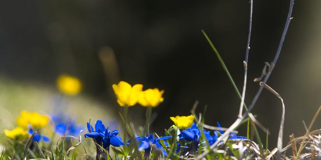 Blumen am Berg im Frühling