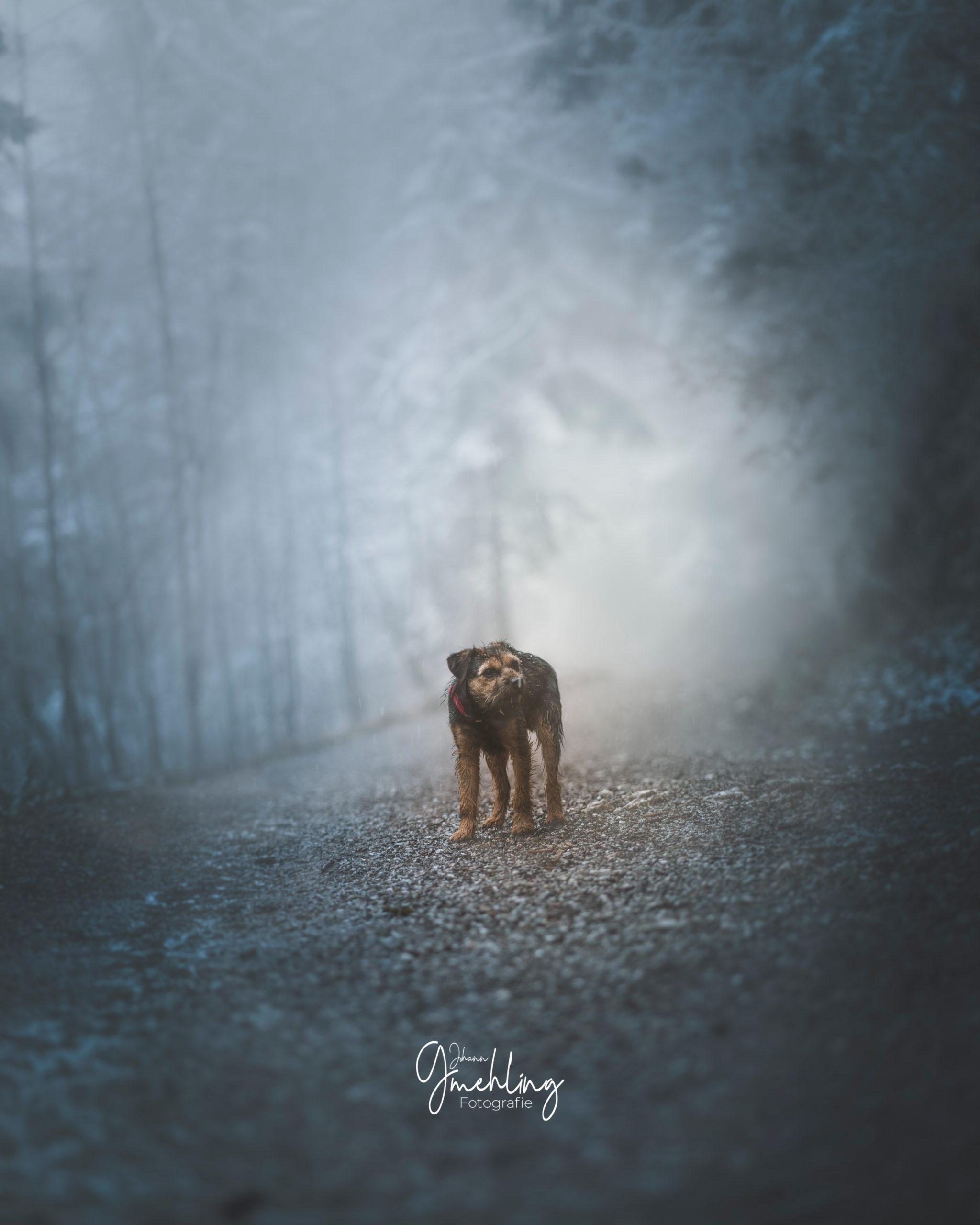 Hund steht im Nebelgrau