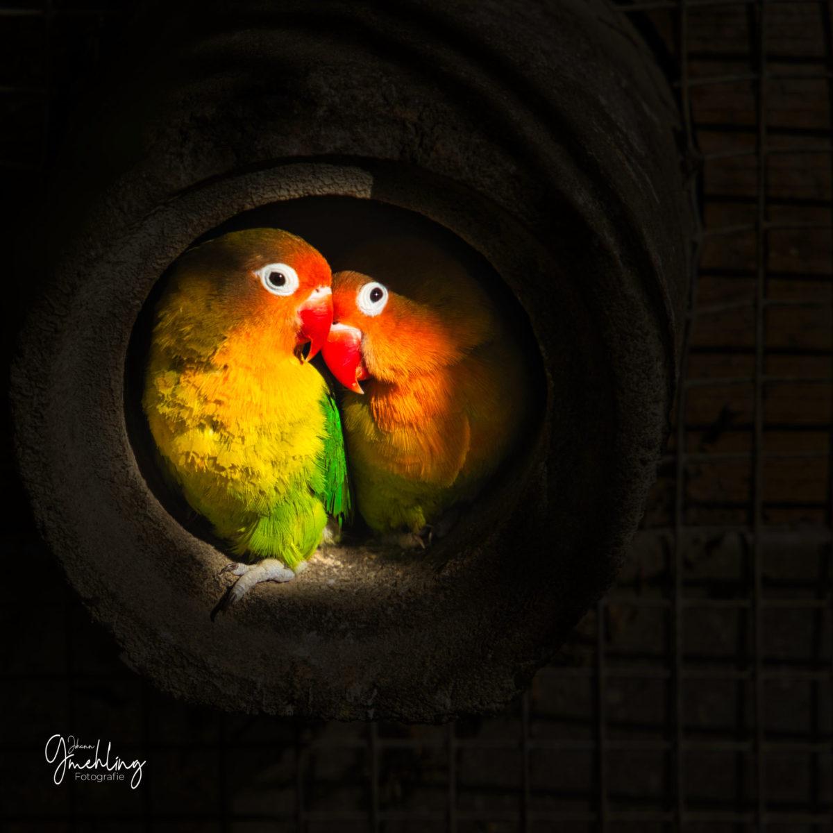 Liebes Vögel