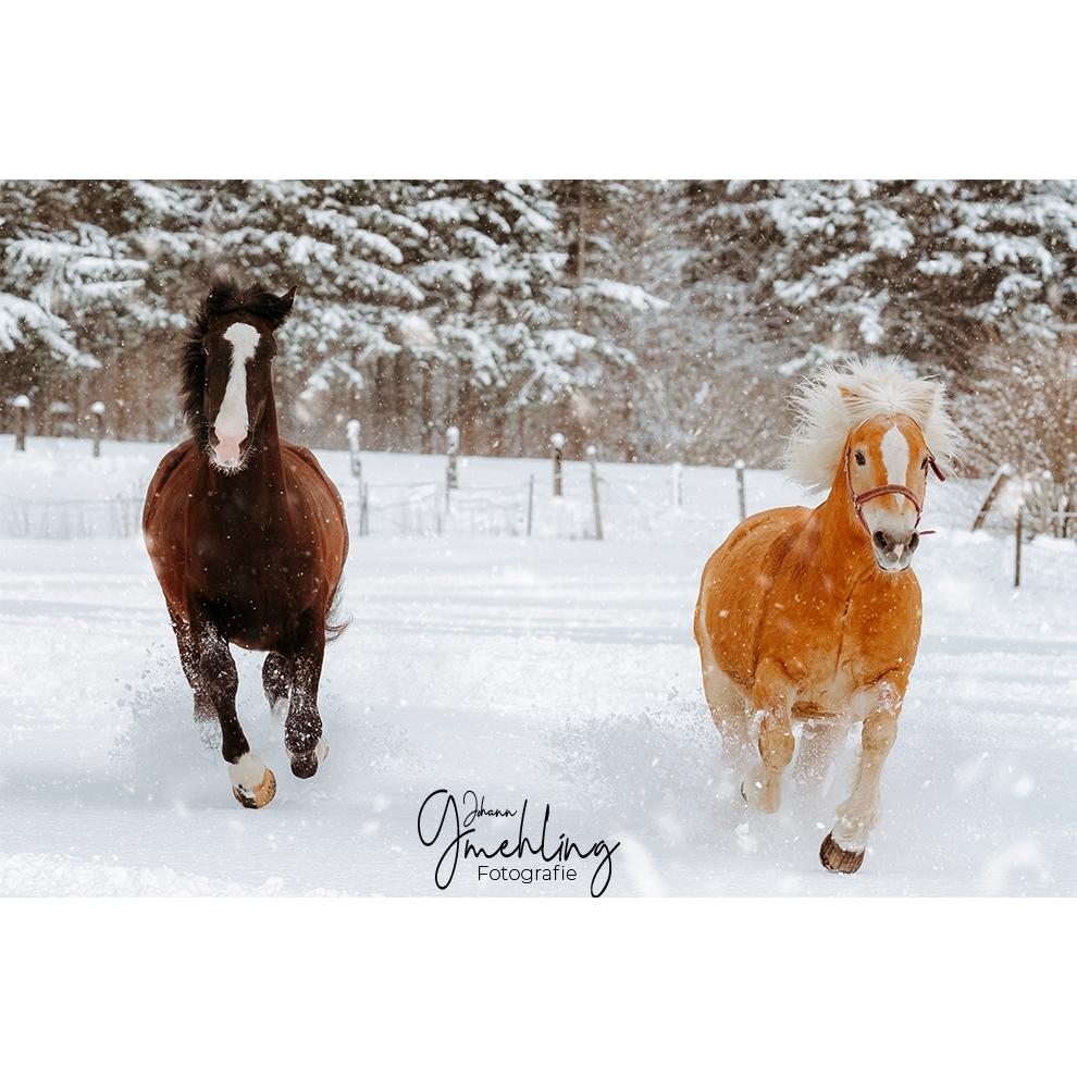 Zwei Pferde im vollen Galopp im Schnee