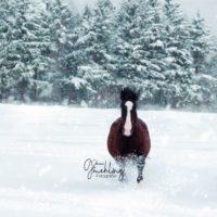 volles Galopp im Schnee