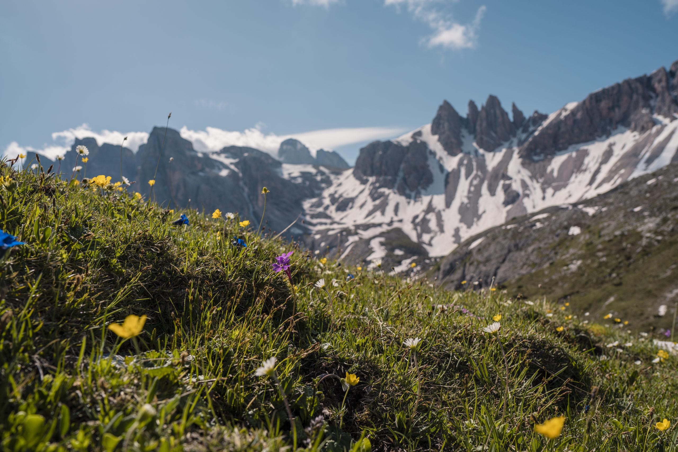 Bunte Blumen im Hochgebirge