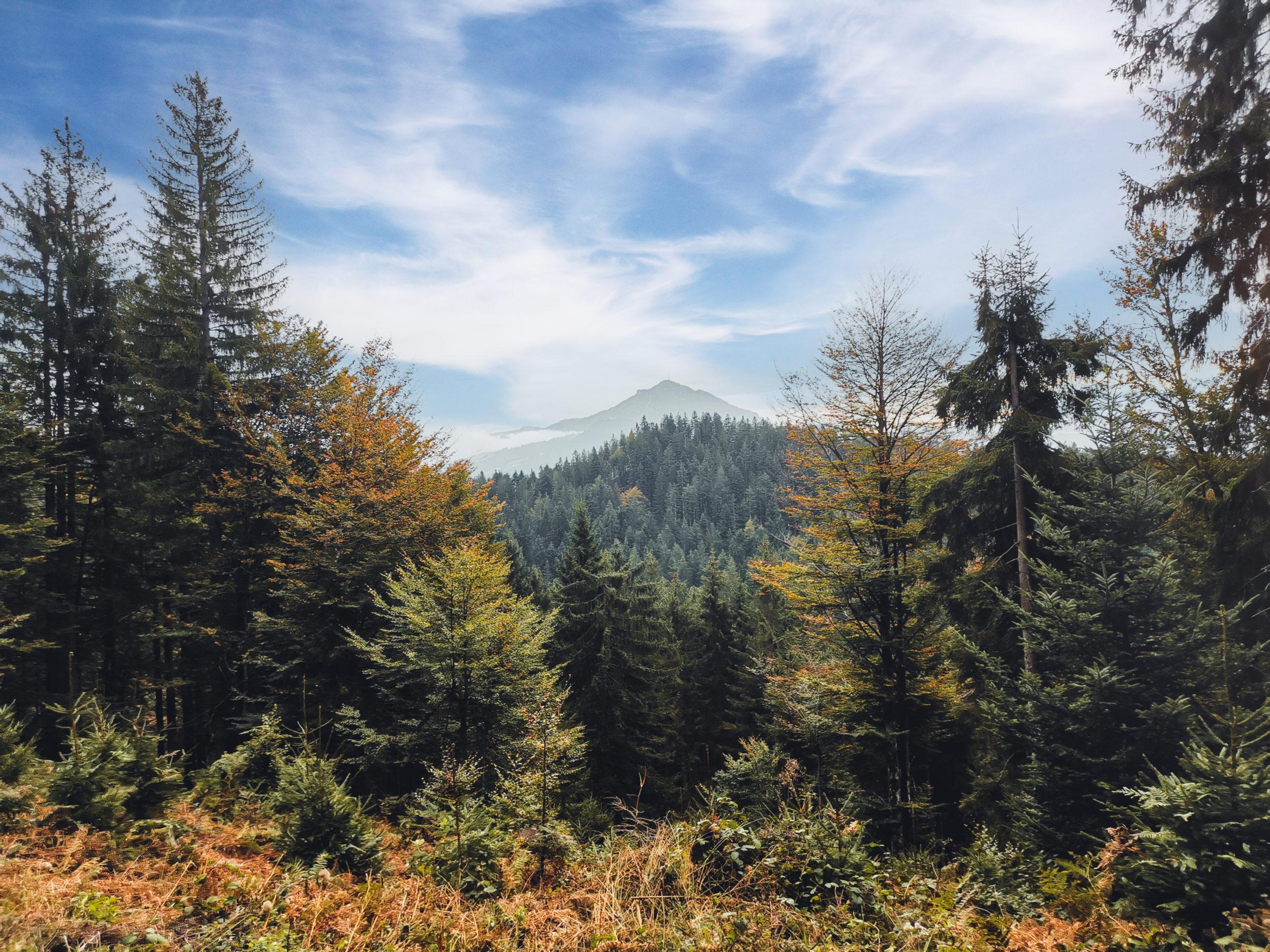 Herbstwald am Wilden Kaiser
